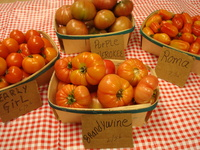 Download_10.02_28_tomatoes_020