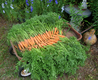 Carrotwagon