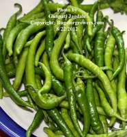 Greenchillies_for_alg