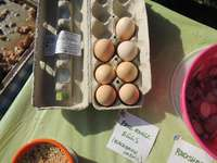 Photo__athens_food_tours_visiting_blackbriar.....best_eggs_in_the_known_universe
