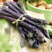 Purple_asparagus_roots