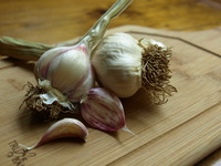 Mexican_red_garlic