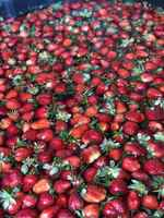 Strawberry_bath