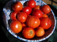 Tomatoes_winter_09