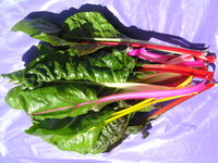 Bright_lights_chard