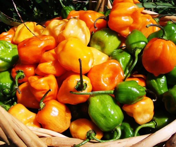 habanero fresh market price