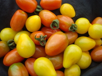 Tomatoes_-_mixed_cherry_002